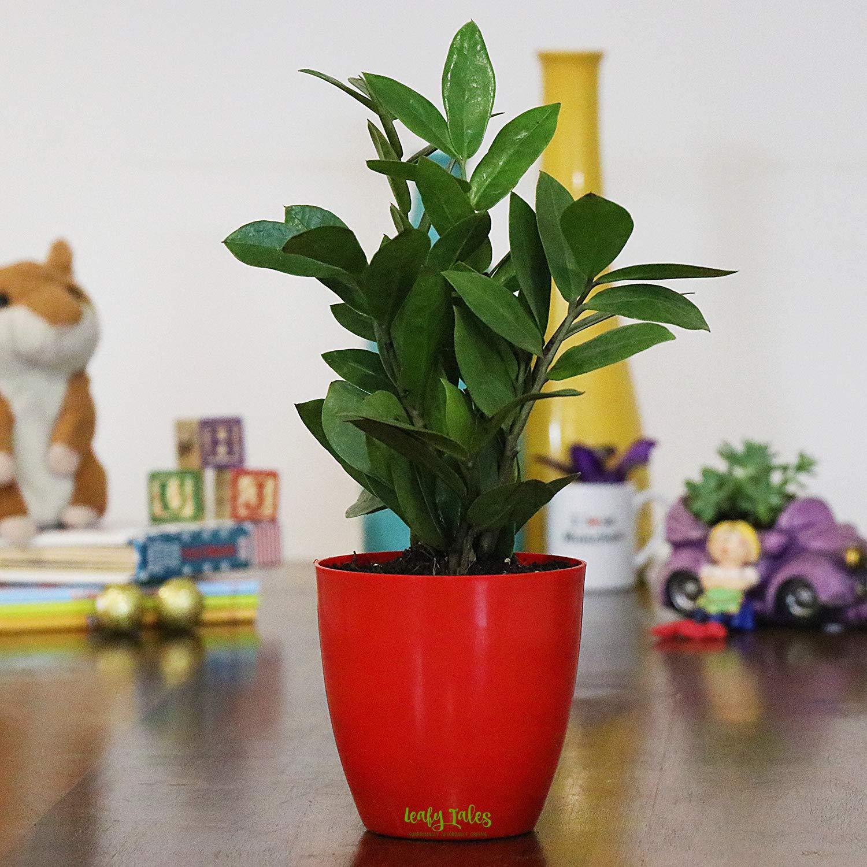 Leafytales Leafy Tales ZZ Plant in White Plastic Desk Planter (B07XC1N2TL) Amazon Price History, Amazon Price Tracker