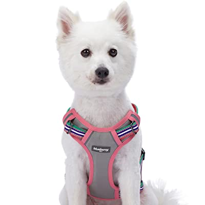 Blueberry Pet 15+ Colors Safe & Comfy Reflective Multi-Colored Stripe Collection