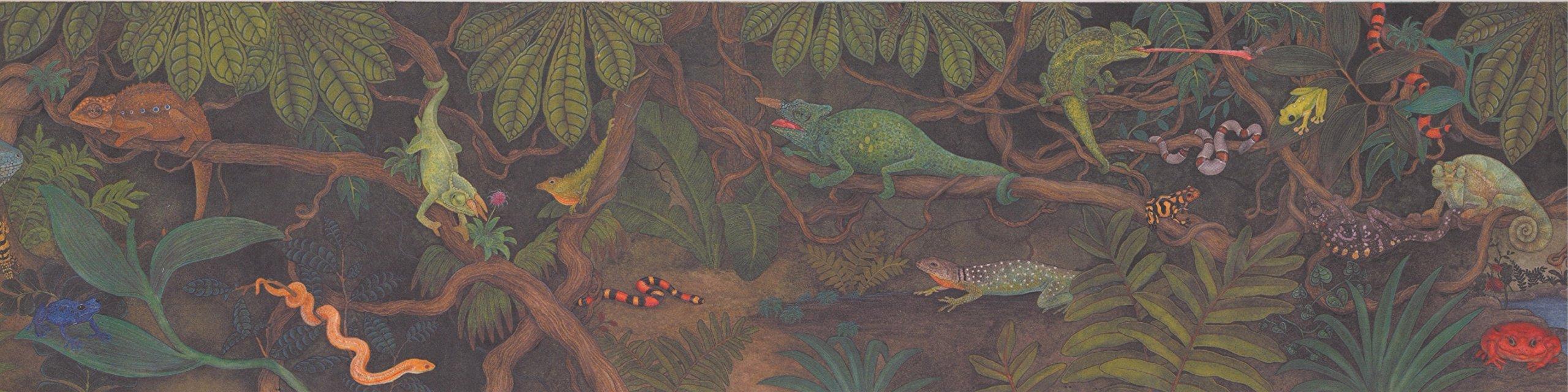 Wallpaper Border - Reptiles Wallpaper Border 3060 CA