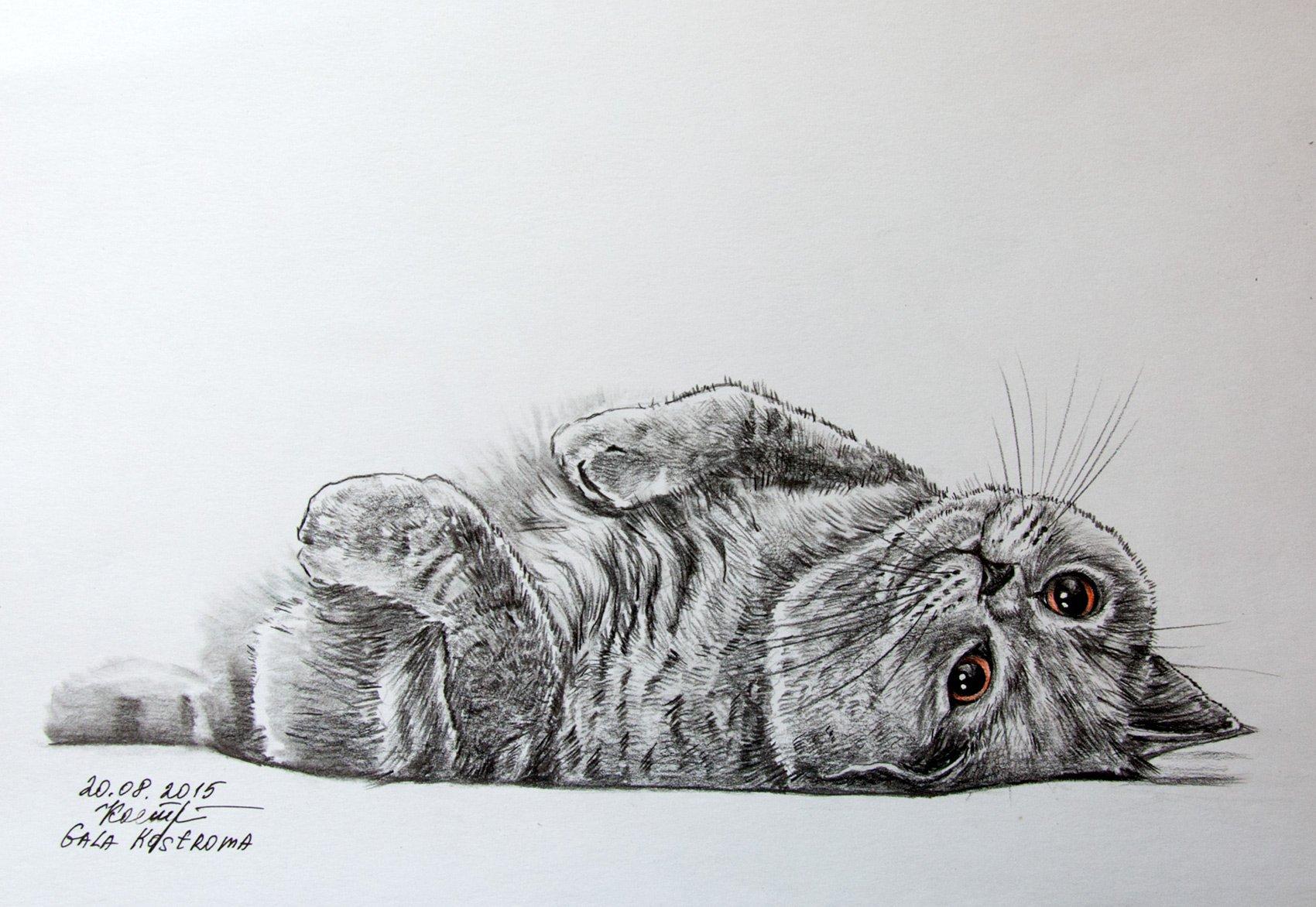 Relax cat original watercolor pencil drawing