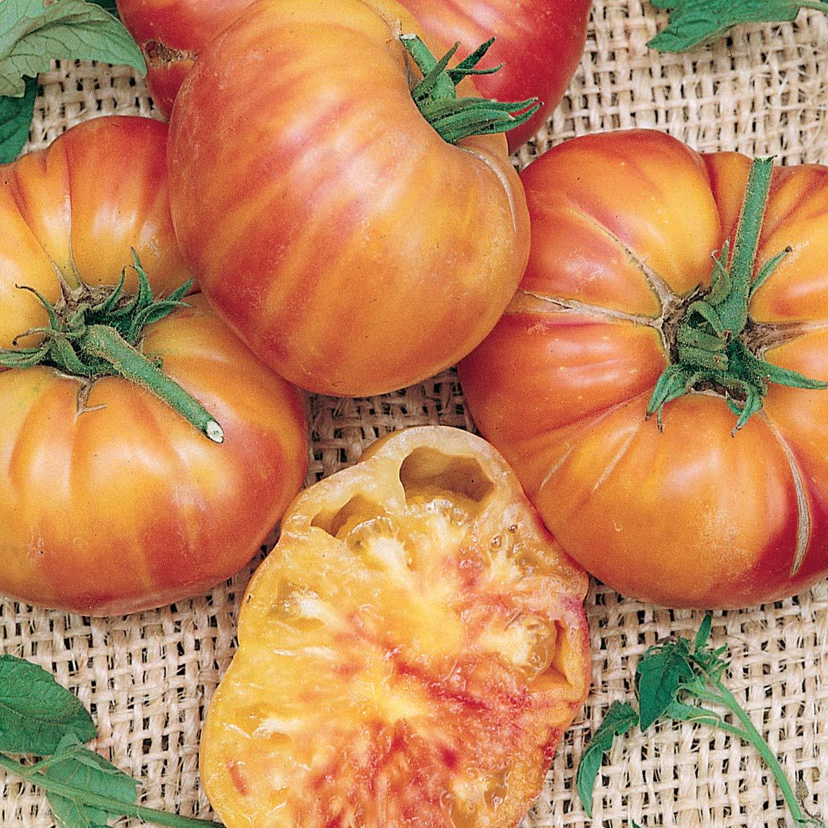 Burpee Mr. Stripey Heirloom   Beefsteak Slicing Tomato    , 3 Live Plants   2 1/2'' Pot
