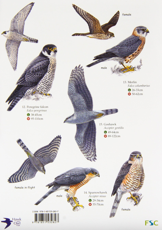 Guide To British Birds Of Prey Chart Amazon Co Uk 9781851532827 Books