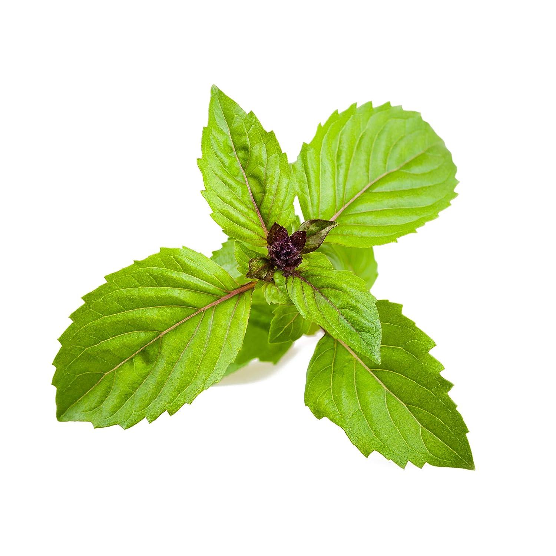 Click and Grow Smart Garden Cinnamon Basil Plant Pod 3-pack