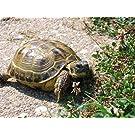 Russian Tortoise Forage Mix (1200 seed) plot herpetology herbivore