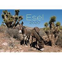 Esel 2020: Der Sympathische Esel-Kalender mit den charmanten Namen