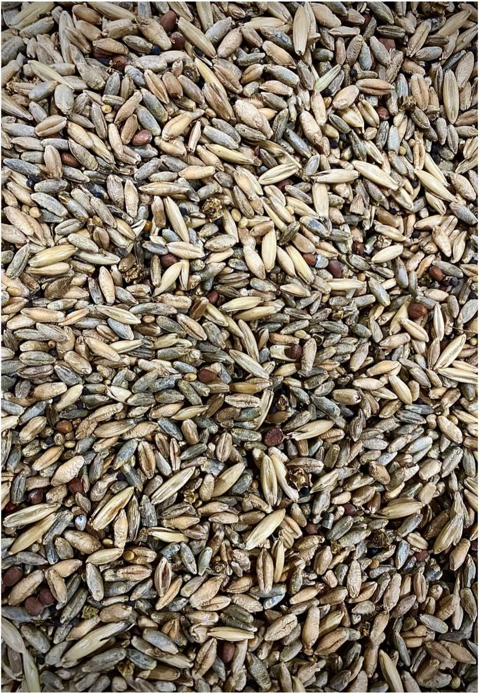 25lb Whitetail Deer Food Plot Seed | Turnip Radish Sugar Beet Clover Chicory Cereal Grain Rye Wheat Triticale Oats Mix | Thunder Prairie Blend