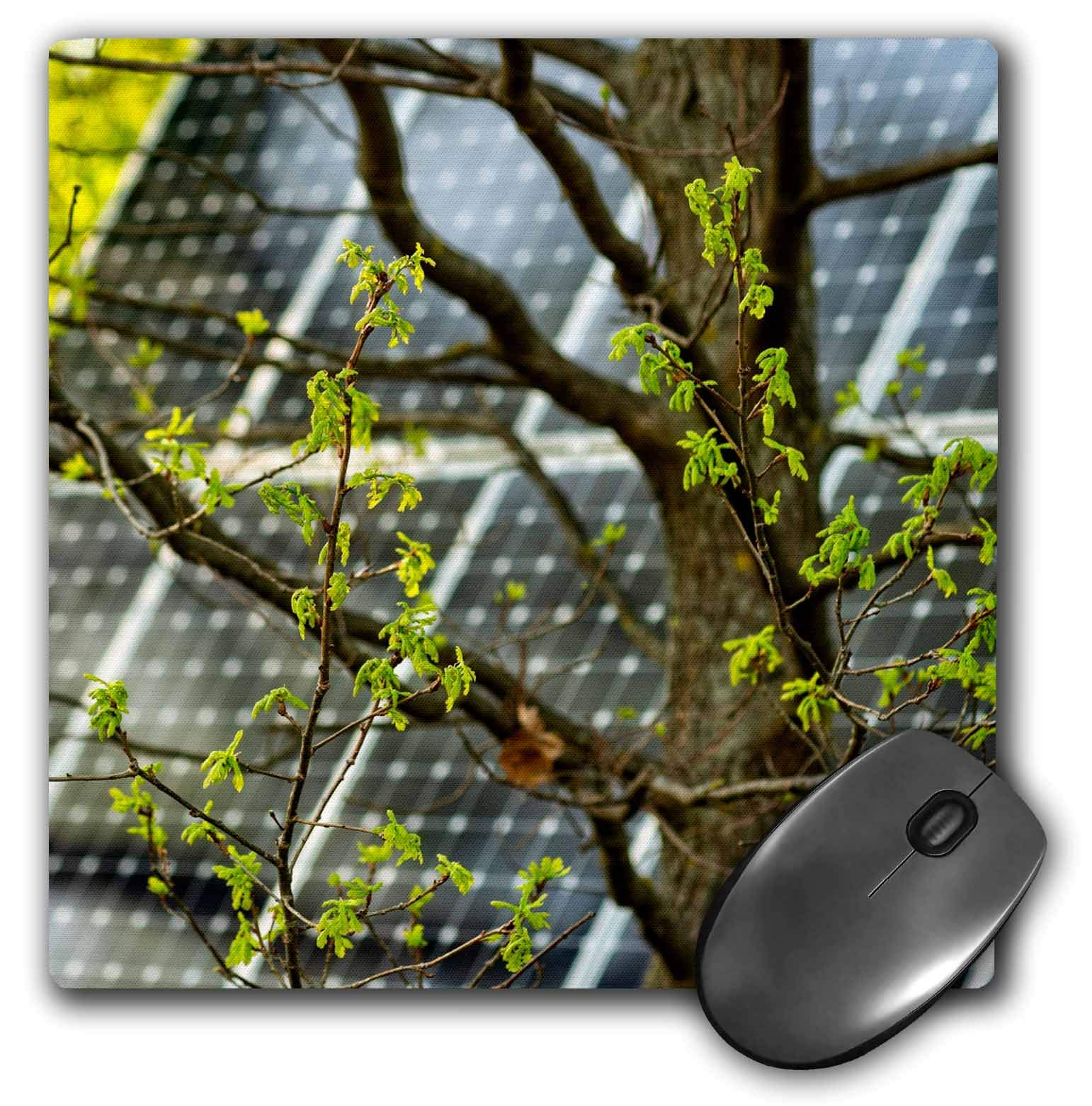 3dRose Alexis Photography - Objects - Oak Tree with Fresh Leaves, Solar Power Panel in The Background - Mousepad (mp_290827_1)