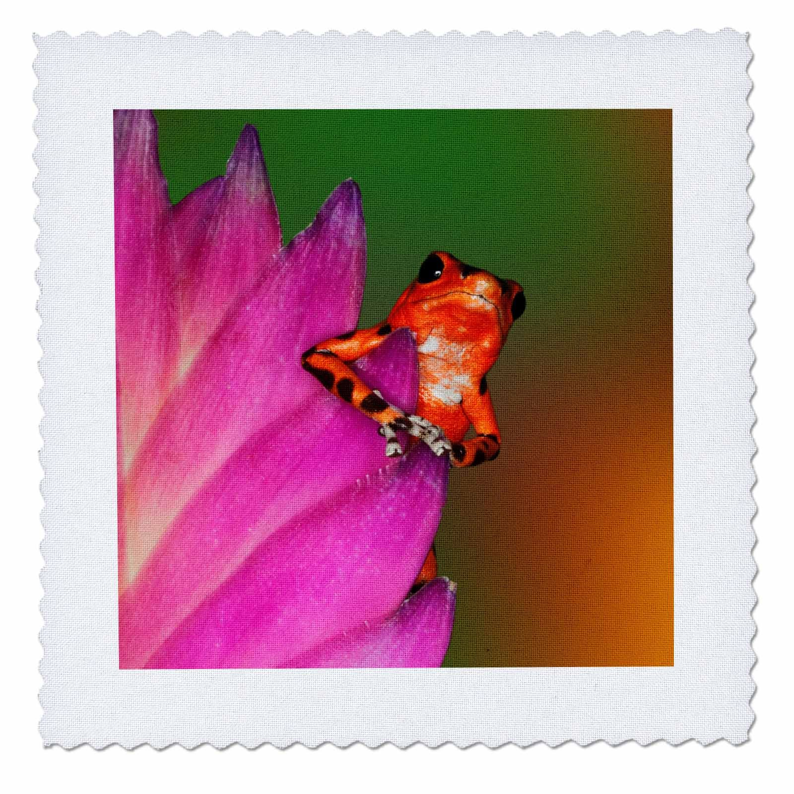 3dRose Danita Delimont - Frogs - South America, Panama. Strawberry poison dart frog on bromeliad flower - 20x20 inch quilt square (qs_278320_8)