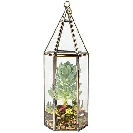 Amazon Com Deco Glass Terrarium Succulent Air Plant Tall