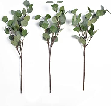 Details about  /20 Preserved Silver Dollar Eucalyptus Branches//Leaves