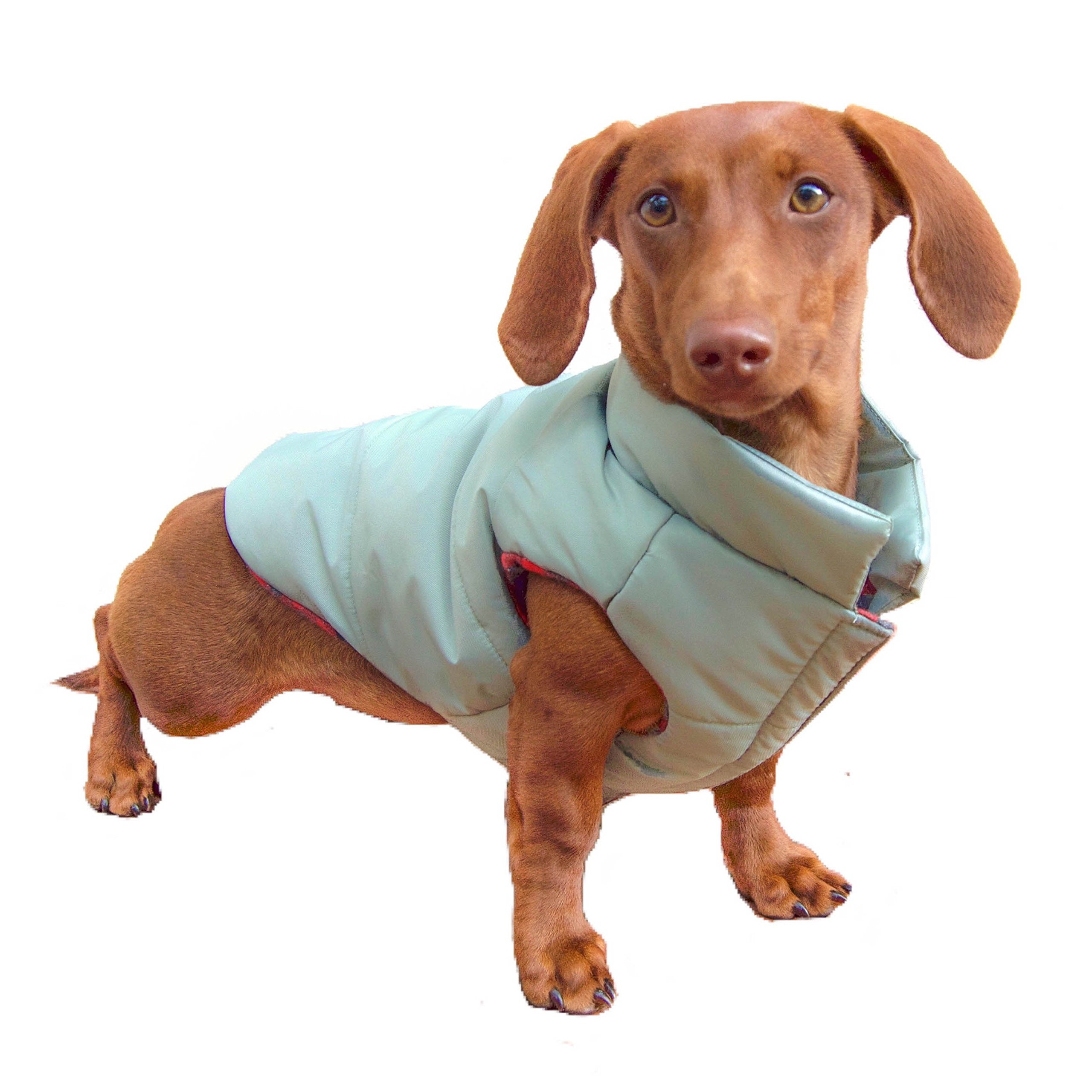 DJANGO Puffer Dog Jacket and Reversible Cold Weather Dog Coat with Full Coverage and Windproof Protection (X-Small, Sage Green/Buffalo Plaid)