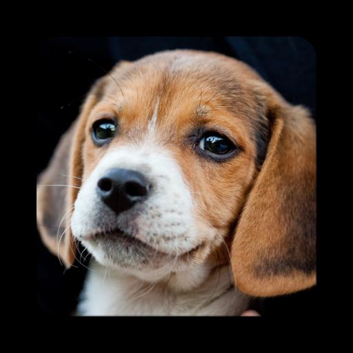Top trend Puppies
