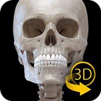 Sistema Esquelético - Atlas 3D