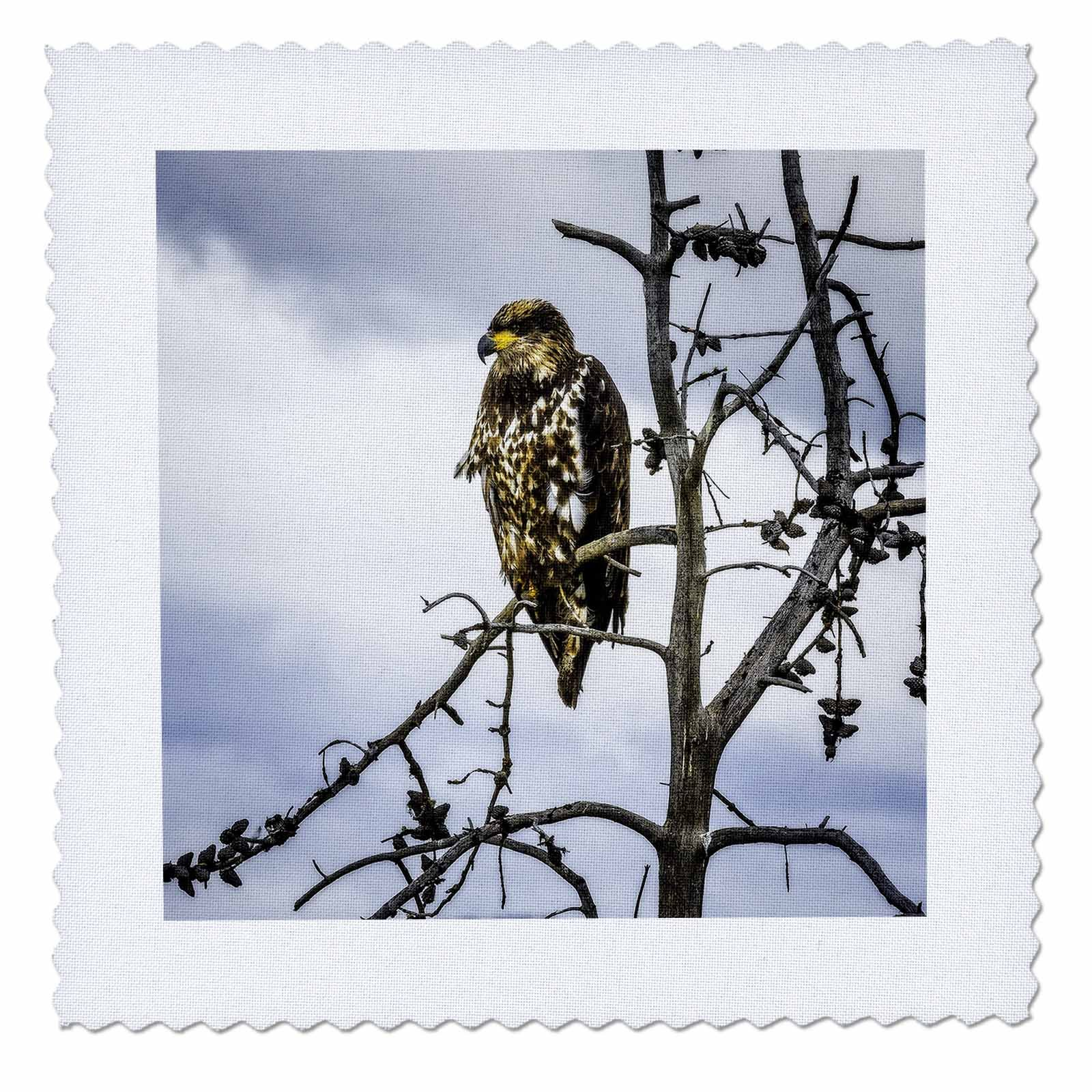 3dRose Mike Swindle Photography - Animals - Hawk in tree - 22x22 inch quilt square (qs_280208_9)