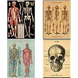 Human Body Vintage Style Biology Poster Set of 4 Decorative 20 x 28