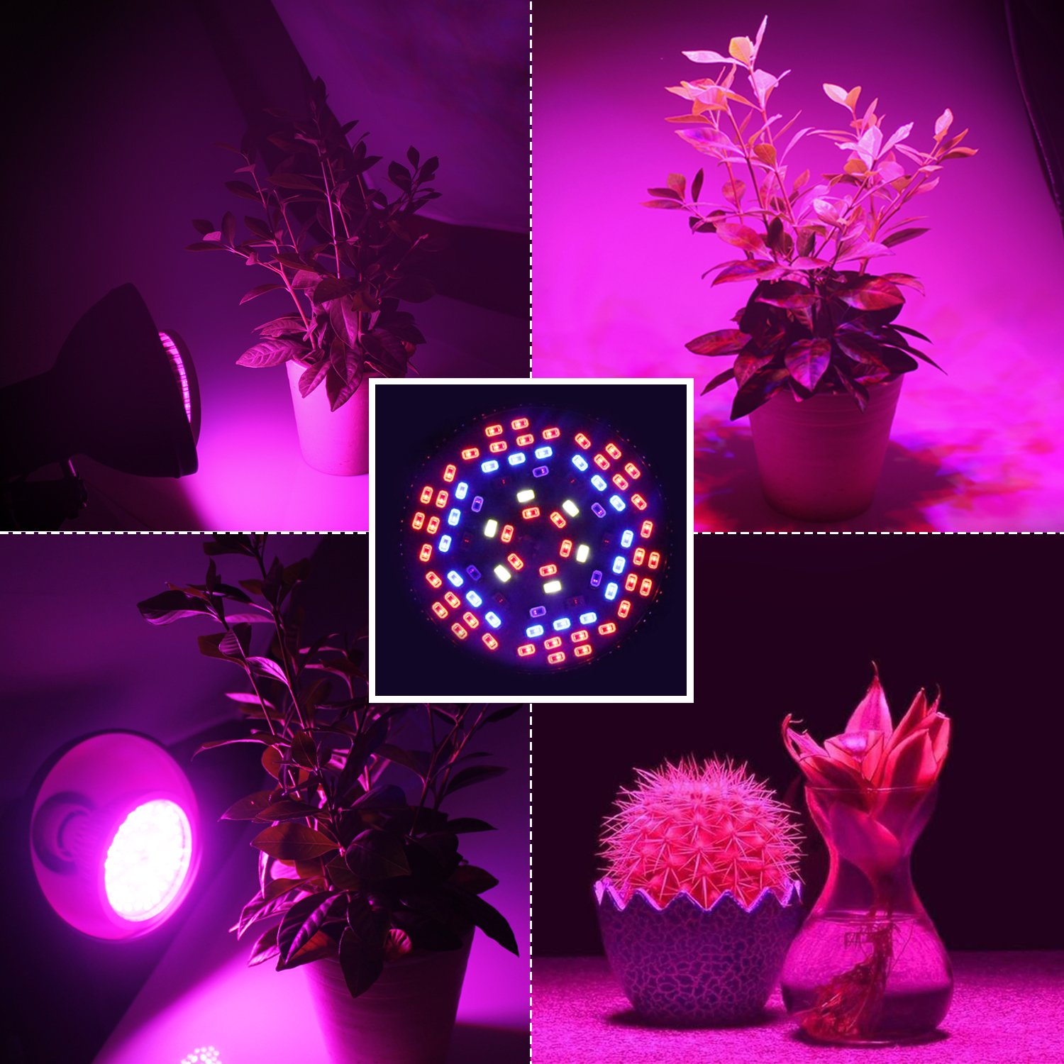 SHEKAR 50W Full Spectrum LED Plant Grow Light Bulb with Shield | Growing Lamp for Home, Indoor Garden Greenhouse and Hydroponic Aquatic (E27, 78LEDs) by SHEKAR (Image #8)