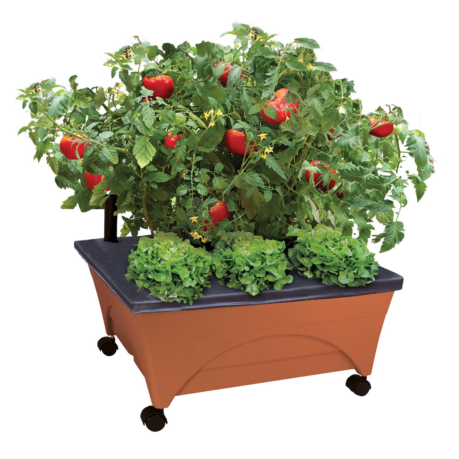 Amazon EMSCO Group City Picker Raised Bed Grow Box Self