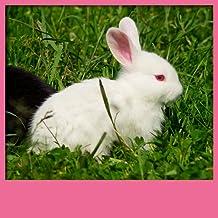 Fonds d'écran de Cute Animals Live
