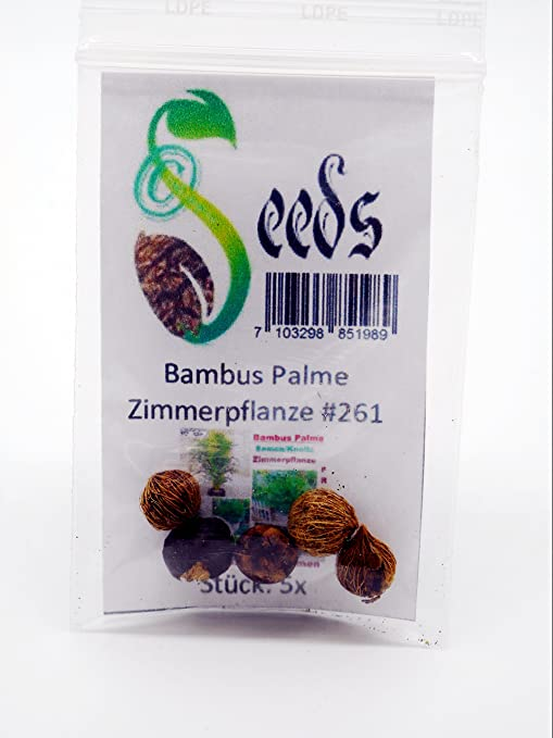 5x Bambus Palme Zimmerpflanze Samen Knolle Zimmerbambus Pflanze 261