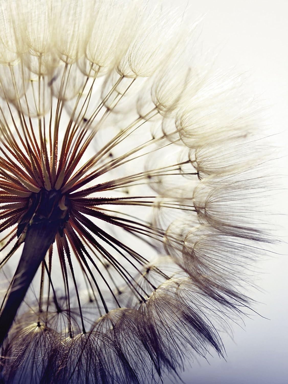 Artland Qualitätsbilder I I I Glasbilder Deko Glas Bilder 50 x 50 cm Botanik Blumen Pusteblume Foto Blau G5RK Große Pusteblume vor Einem blauen Hintergrund 865263