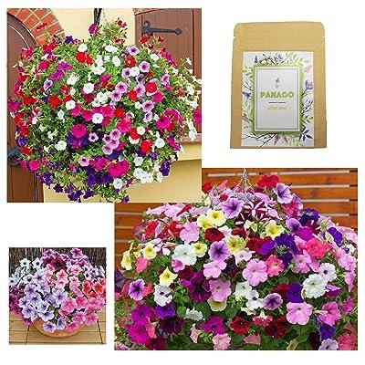 "Petunias Seeds""Crazy Mixture"" (Rainbow Colors) for Indoor & Garden Planting, 500 Non-GMO Perennial Potted Petunia Hybrida Vines/Flower Seeds : Garden & Outdoor"