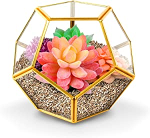 Yuncang Gold Glass Geometric Terrarium with Watering Can,Home Tabletop Decor,Pentagon Regular Brass Planter for Succulent Fern Moss Air Plants, Miniature Fairy Garden Container Gift (No Plants)