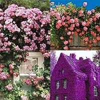 Ncient 100 Semi Sementi di Piante Rampicanti Rock Cress Flower Semi Fiori Rari Profumati Piante per Orto Giardino Balcone Interni ed Esterni