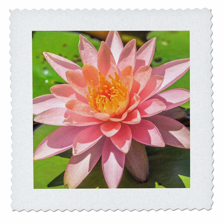 Delicate 3drose Danita Delimont Flowers Close Up Of Pink Flower