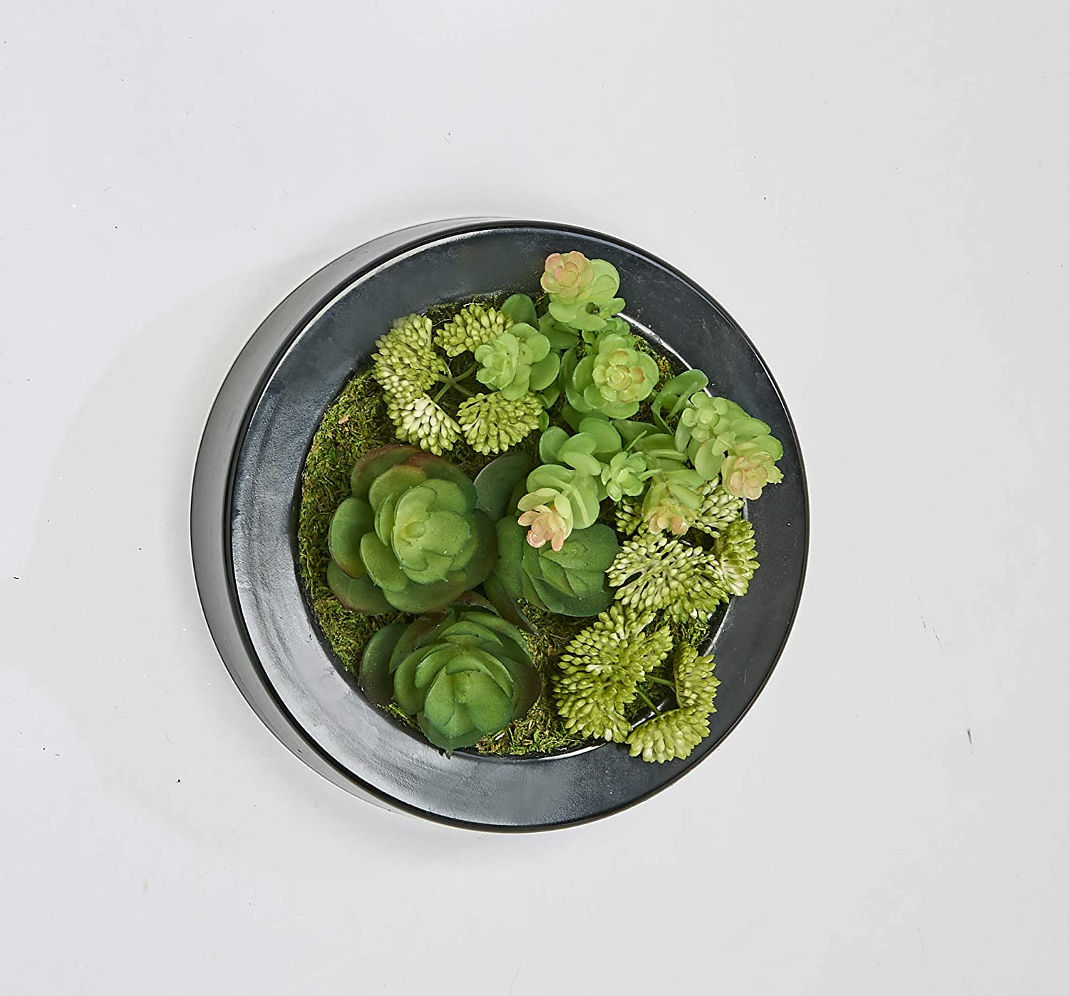 Worth Imports Mixed 7 Round Black Plastic Container Succulent Green
