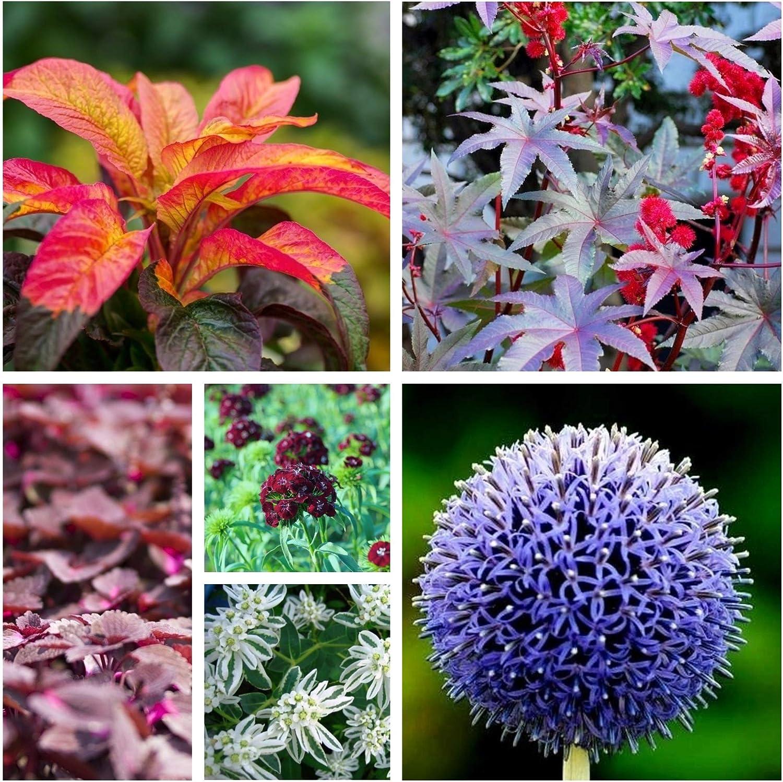 Jardín Secreto - Semillas de 6 especies de plantas con flores. - 6 paquetes de semillas: Amazon.es: Jardín