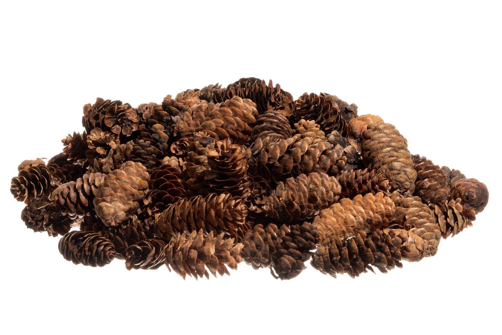 Pine Cones | Small Pine Cones | Mini Black Spruce Pine Cones | Pine Cone Filler (24 oz.) | Plus Free Nautical Ebook by Joseph Rains