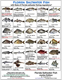 Amazon com fish of florida gulf of mexico identification chart