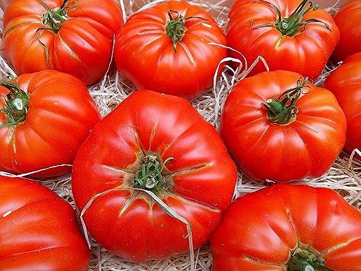 RWS 10 semillas de tomate RAF variedad de Super Marmande, de ...