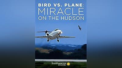 Bird vs. Plane: Miracle on the Hudson