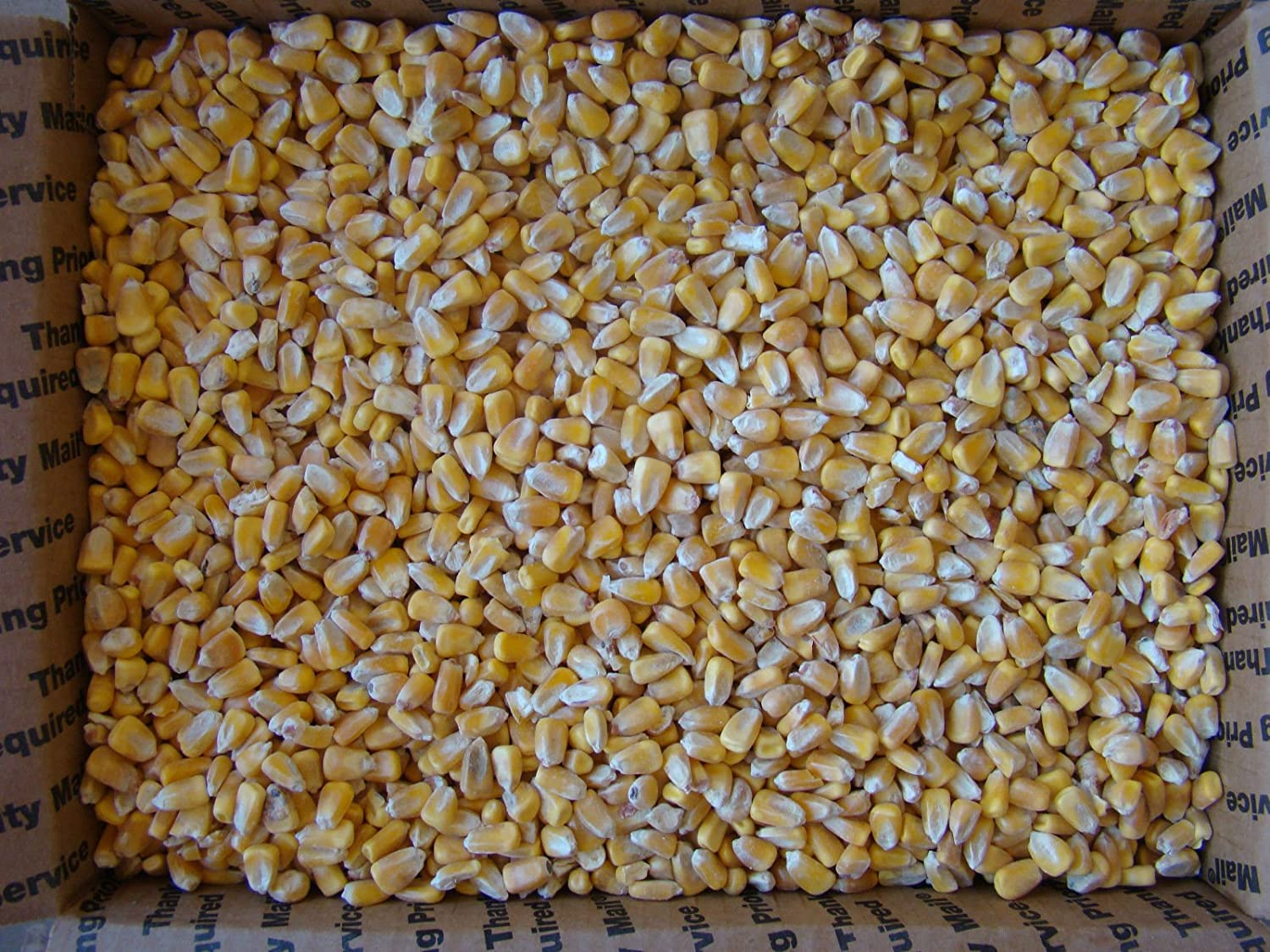 15 Lbs Iowa Country Corn 2017 crop