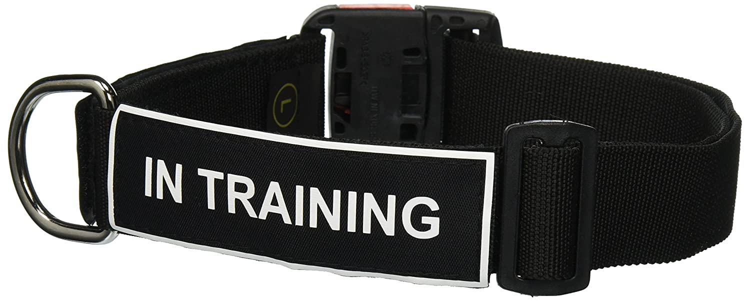 Dean and Tyler Patch Collar , Nylon Dog Collar with in Training Patches Black Size  Large Fits Neck 26-Inch to 37-Inch