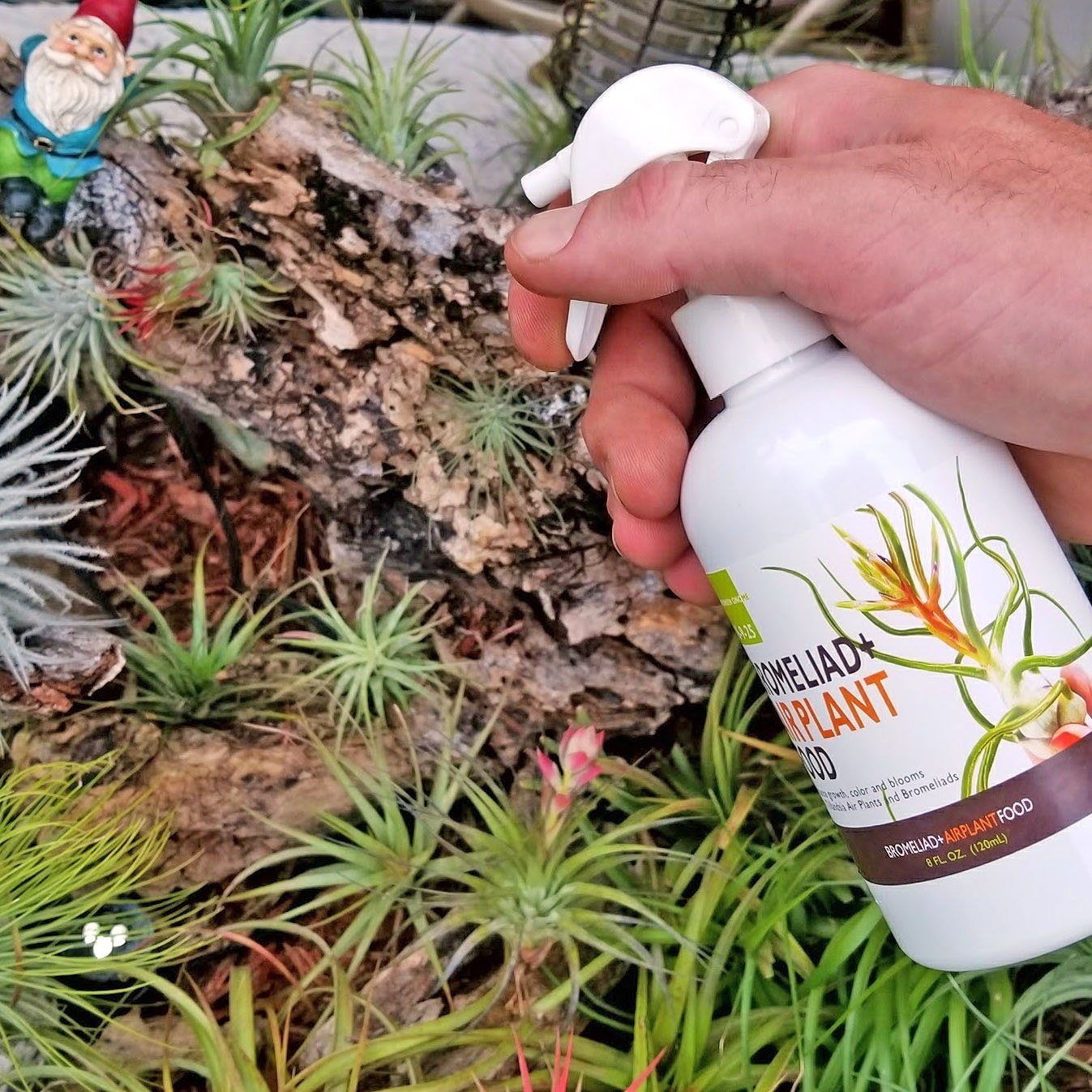 The Drunken Gnome Tillandsia Air Plant Food and Fertilizer for Enhanced Growth, Color and Blooms (8 oz Plus Mister)
