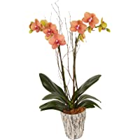"""Color Orchids 3101FBO Live Fall Blooming Double Stem Plant in Ceramic Pot, 20"""" x 24"""""""
