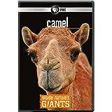 Inside Nature's Giants: Camel [DVD] [2012] [Region 1] [US Import] [NTSC]