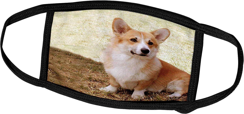 3dRose Dogs Corgi - Pembroke Welsh Corgi - Face Masks (fm_1065_1)