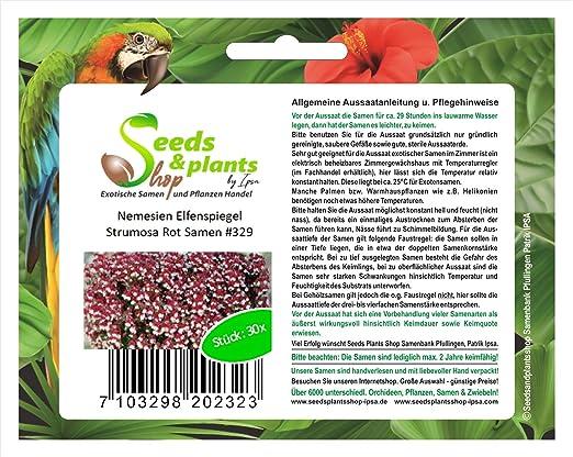 30 espejo Nemesien Elf Lomechusa rojo semillas plantas jardín flores #329: Amazon.es: Jardín