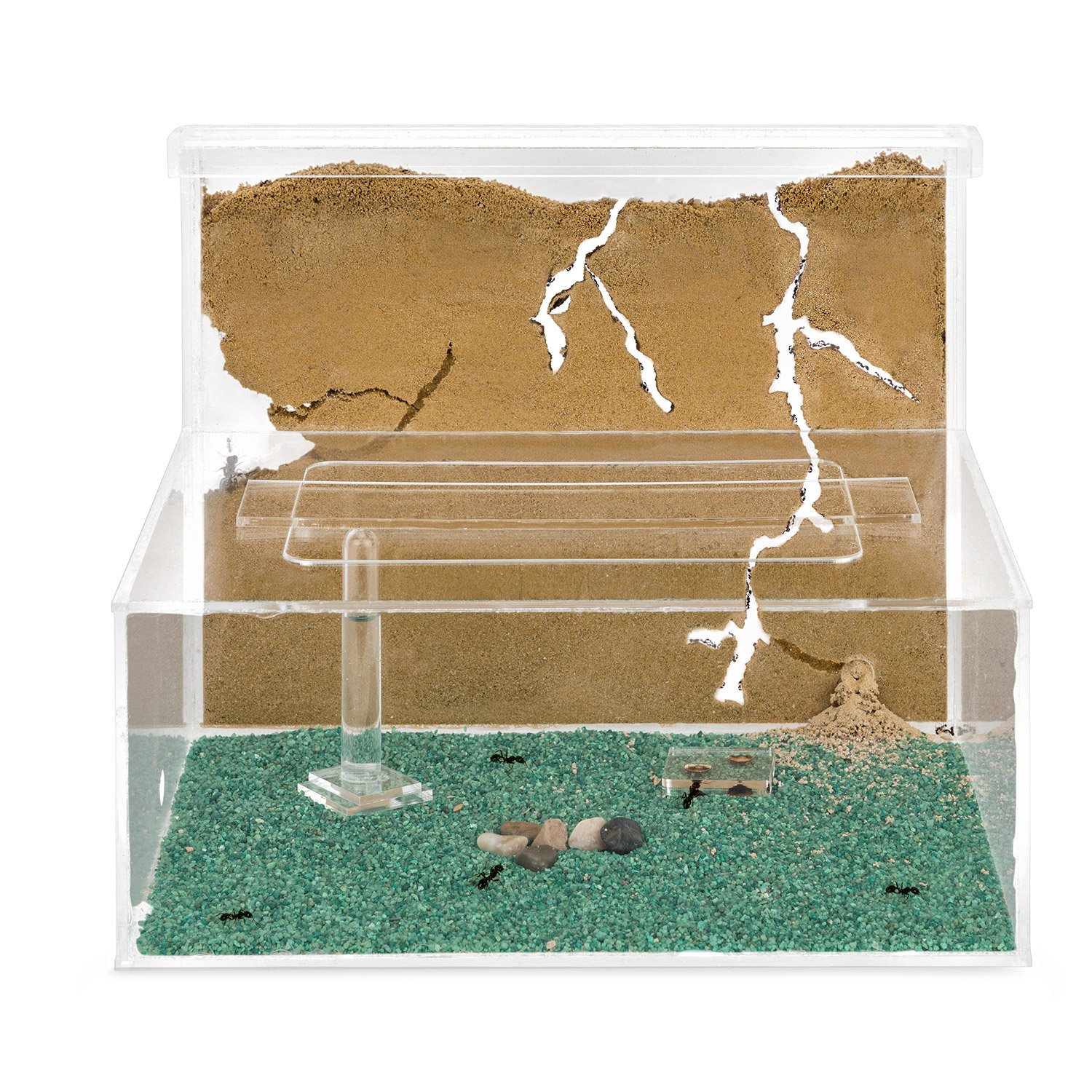 Sand Ant Farm L (Formicarium (Anthill, Formicarium, Educational, Ants)