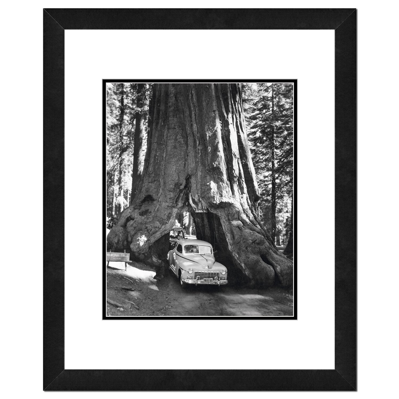 Photo File Wawona Tree/Sequoia Tree