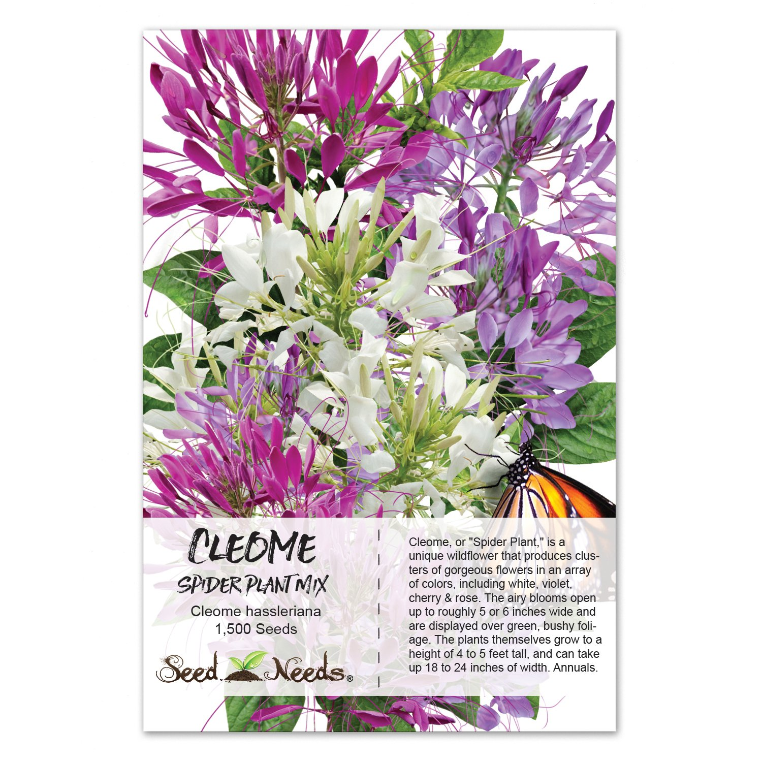 Amazon Package Of 1 500 Seeds Cleome Mixture Cleome