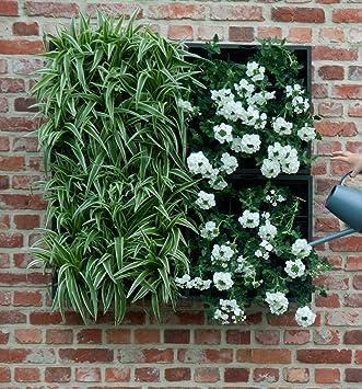 Wandbegrünung wandbegrünung karoo für 9 pflanzen 40 x 40 in grau amazon de garten