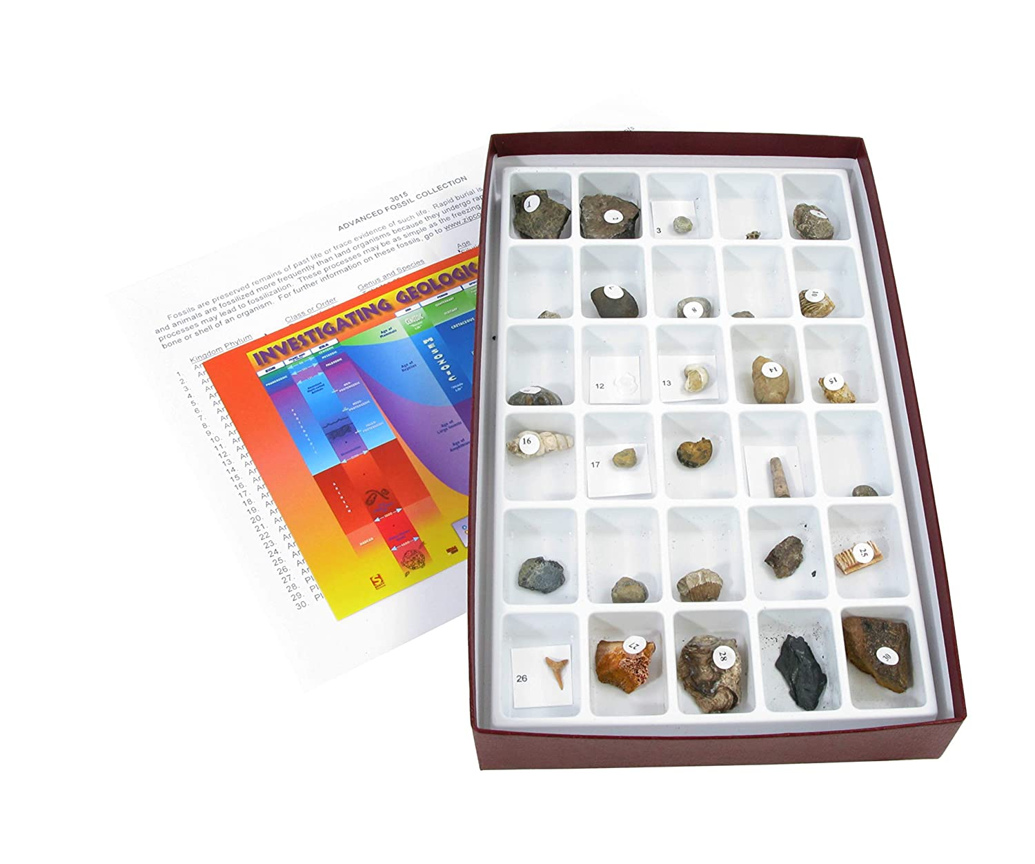 American Educational 30 Piece Advanced Fossil Collection 3015-S