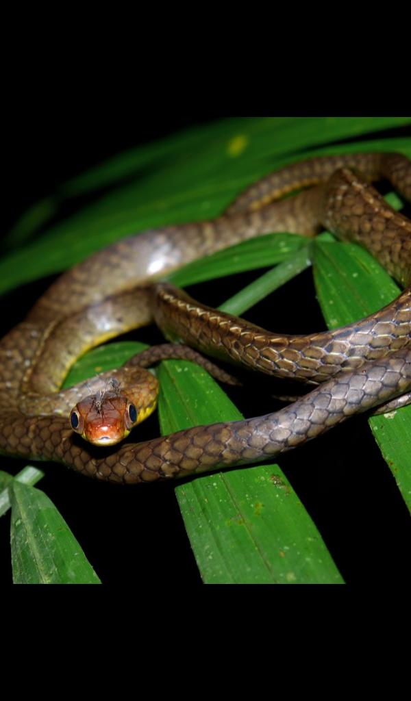 Amazon.com: Cobra Snake Wallpaper -- HD Wallpapers of ...