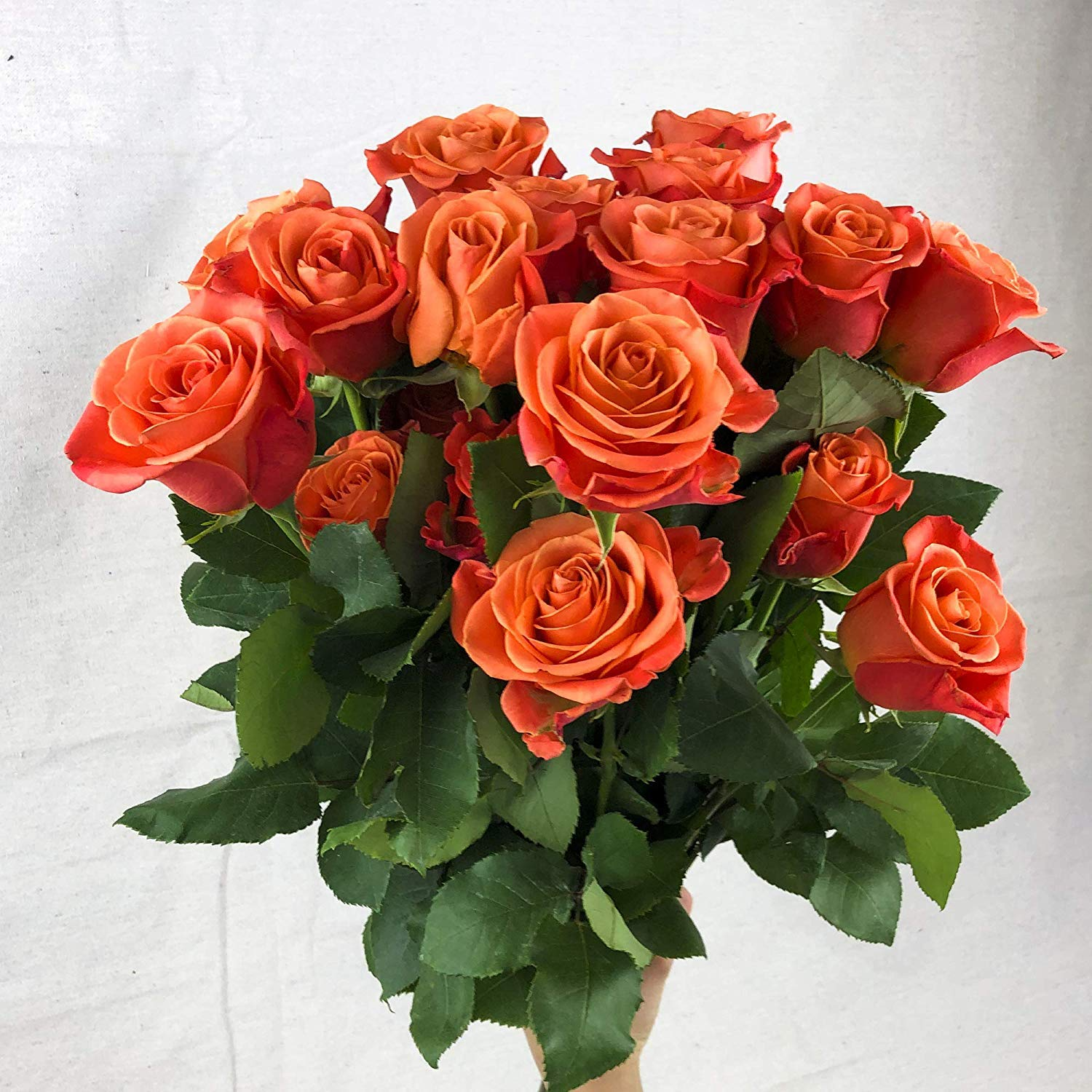 Green Choice Flowers - 36 (3 Dozen) Premium Orange Fresh Roses with 20 inch Long Stem Farm Fresh Flowers Beautiful Orange Rose Flower Cut Per Order Direct from Farm Free Fast Delivery Long Lasting