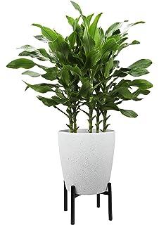 aefe2a9c09503b Worth Garden Soporte para Plantas de Mediados de Siglo 20.3 cm Tall Metal  Flower Potero Soportes