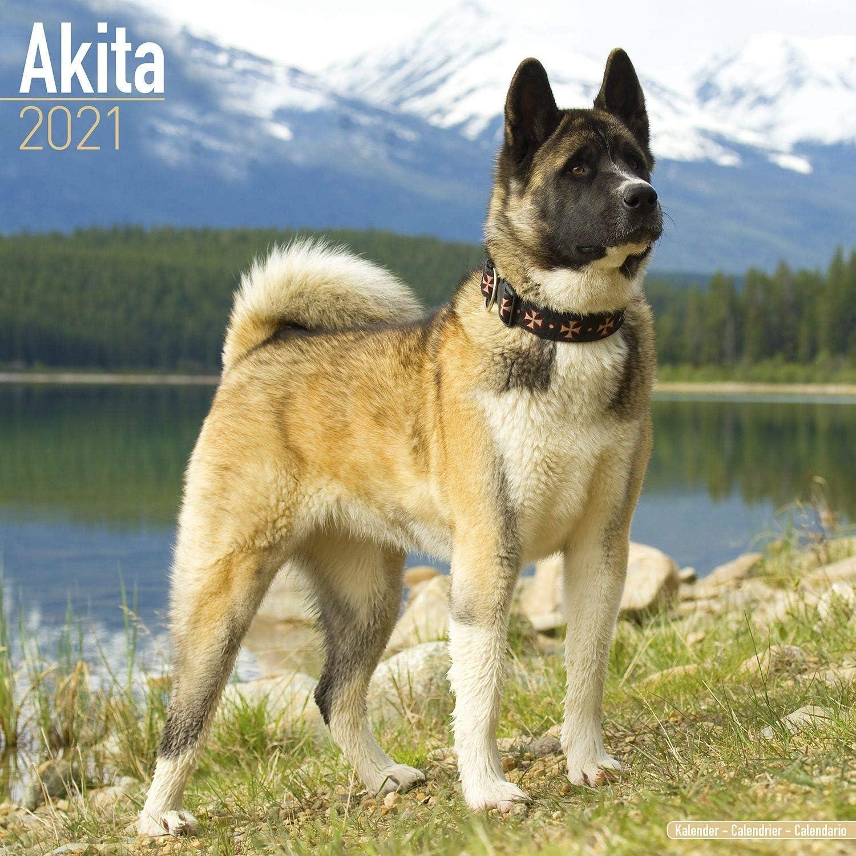 Amazon Com Akita Calendar 2021 Dog Breed Calendar Wall Calendar 2020 2021 Office Products